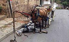 Faytona binme atlar ölüyor!