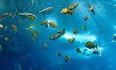 Dünya'daki balıkların yüzde 80'i yok olabilir