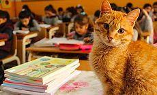 'Tombi' sınıfa geri dönüyor