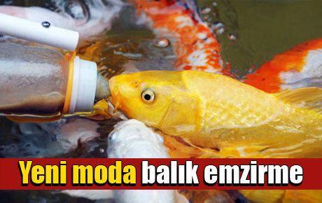 Yeni moda balık emzirme
