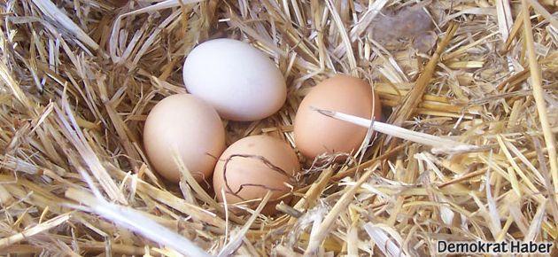 'Yumurta saman arasına konunca tüketici organik sanıyor'