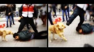 'Yoldaş' köpek Taksim'deki gözaltı sonrası polis aracını kovaladı