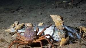 Kuzey Kutbu'nda okyanus dibindeki canlı yaşamı
